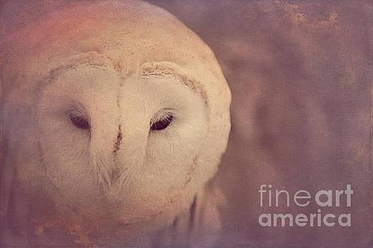 Barn Owl 2 by Chris Scroggins