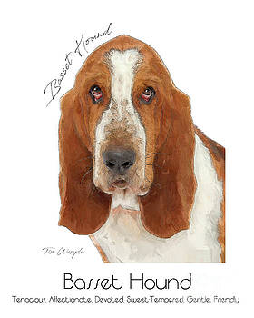Basset Hound Poster by Tim Wemple