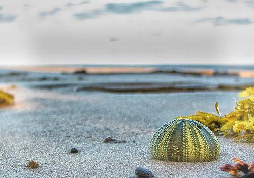 Beach Level by Richard Espenant