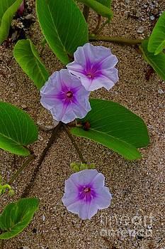 Beach Morning Glory by Craig Wood