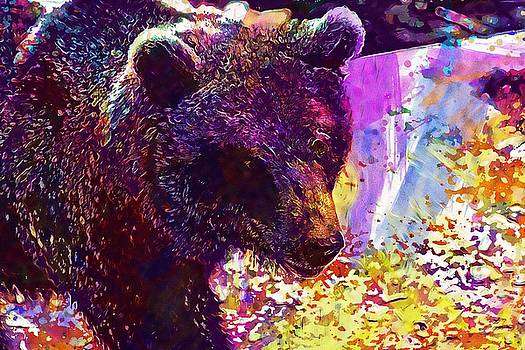 Bear Predator Zoo Fur Animal  by PixBreak Art