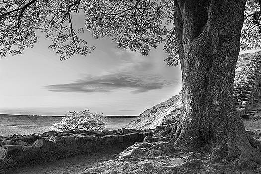 Beautiful black and white landscape image of Sycamore Gap at Had by Matthew Gibson