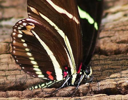 Paulette Thomas - Beautiful Butterfly