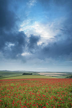 Beautiful landscape image of vibrant poppy field at sunrise in S by Matthew Gibson