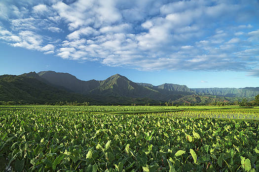 Beautiful morning clouds pass over the flooded taro fields in Hanalei Valley. by Larry Geddis