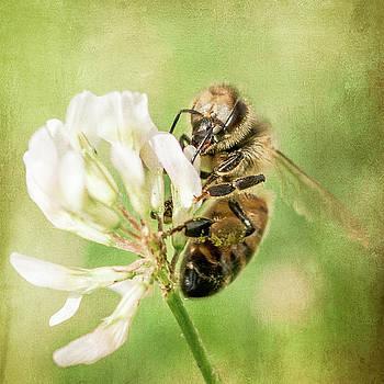 Bee by Jerri Moon Cantone