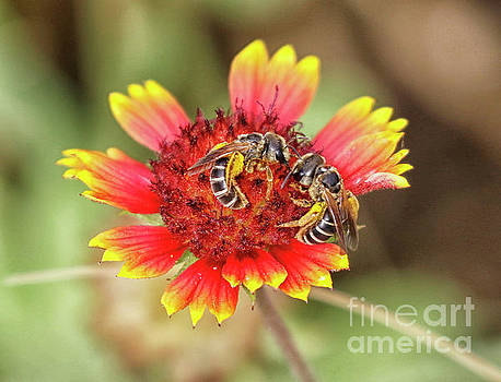 Bee-licious Flower by Myrna Bradshaw