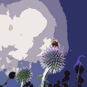 James Hill - Bee on an Allium