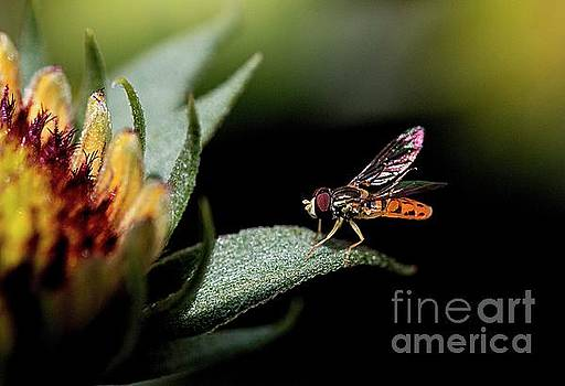 Bee on flower by Jim Wright