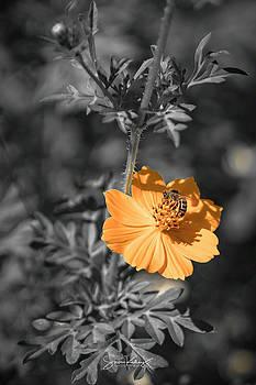 Bee on Flower by Steve Kelley