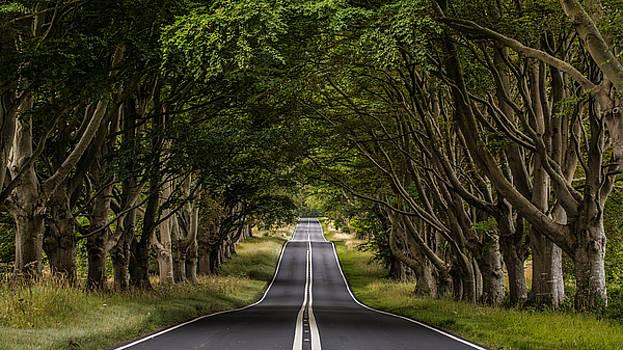 Beech Avenue by Kelvin Trundle