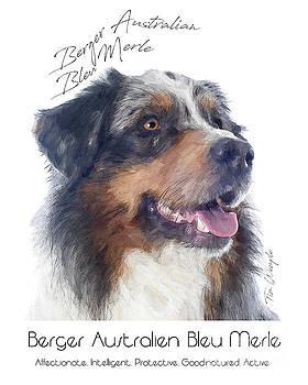 Berger Australien Bleu Merle Poster by Tim Wemple