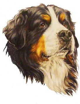 Barbara Keith - Bernese Mountain Dog