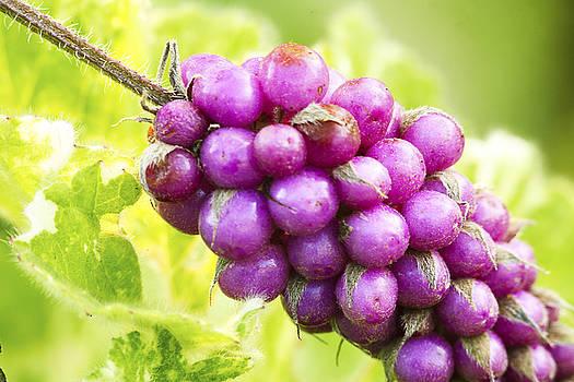 Berries by George Lovelace