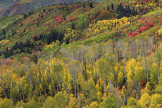 Big Cottonwood Canyon Fall Colors by Dean Hueber