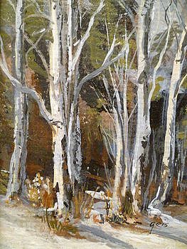 Birch in Winter by Kay Geis