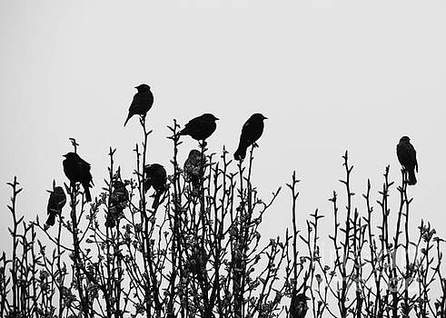 Cheryl McClure - Birdies