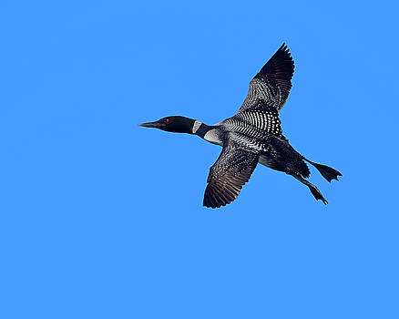Black and Blue by Tony Beck