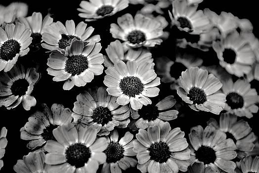 Sumit Mehndiratta - black and white flowers