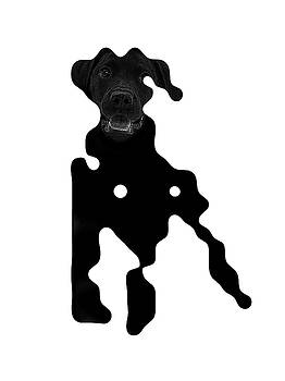 Black dog by Vladas Orzekauskas