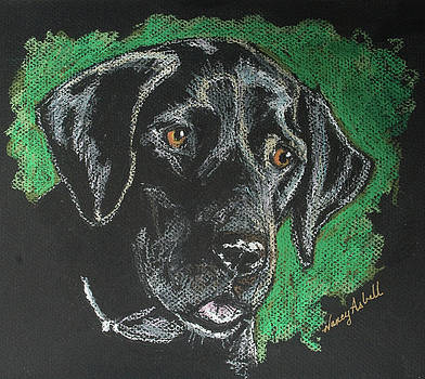 Black Lab Pastel by Michele Hollister - for Nancy Asbell
