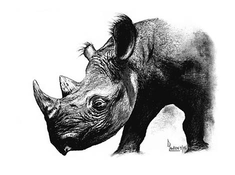 Black Rhino by Dave Lawson