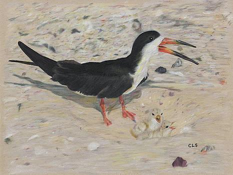 Black Skimmer Nest by C L Swanner