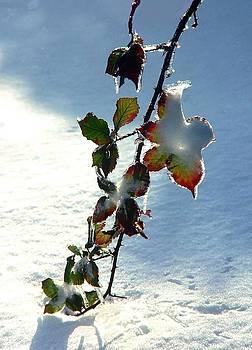 Blackberry In Winter by David Gardner