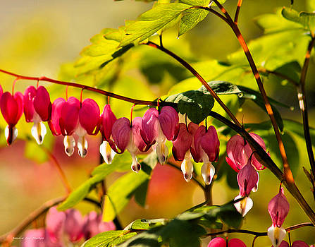 Sandra Huston - Bleeding Hearts in Dappled Light
