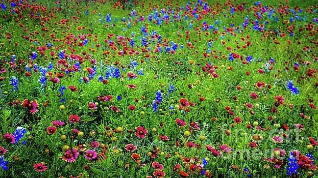 Blooming Wildflowers 537 by D Davila