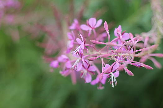 Blossom Flowers by Begonia Mallenco