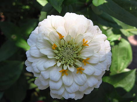 Blossom by Galina Todorova