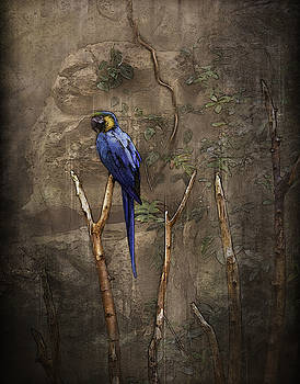 Ray Van Gundy - Blue and Yellow Macaw