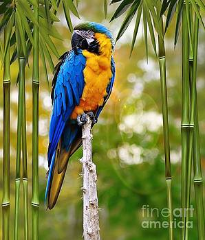 Blue and Yellow Macaw by Elaine Manley