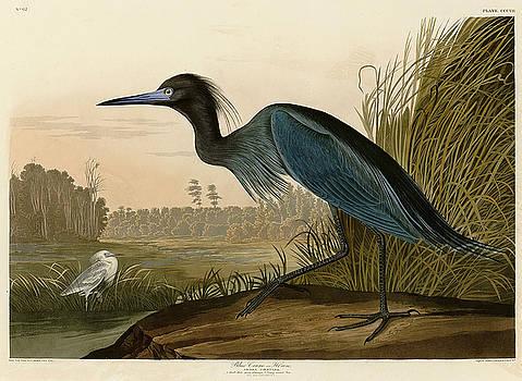 Blue Crane or Heron by John James