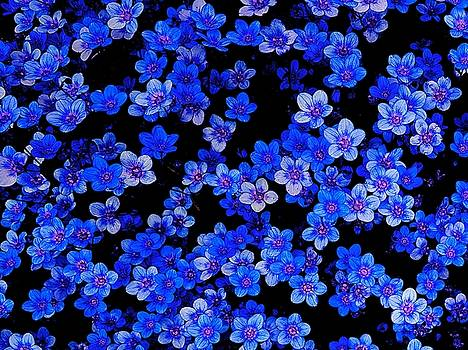 Colin Drysdale - Blue Flowers