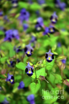 Svetlana Sewell - Blue Flowers