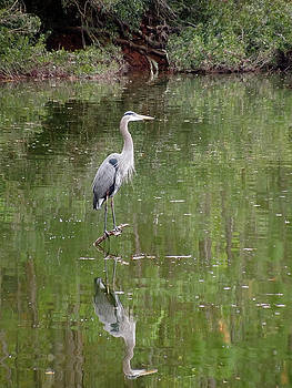 Blue Heron II   by Don Wright