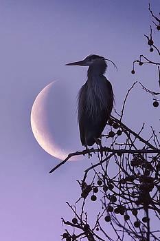 Blue Heron Moon by Rob Blair