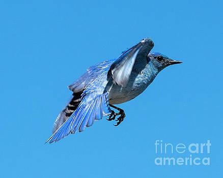 Blue on Blue by Mike Dawson