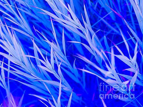 Blue Grass by Tara Lynn