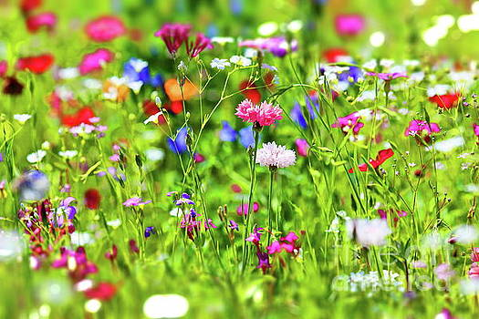 Flower meadow by Fotoping