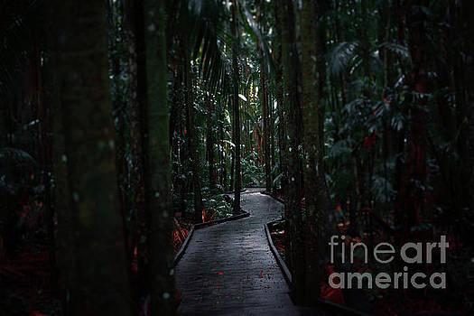 Boardwalk leading through the dark rainforest. by Rob D