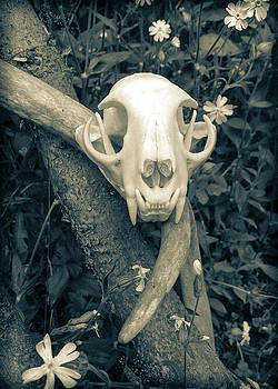 Ronda Broatch - Bobcat Deer Antler