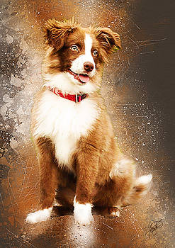 Border Collie by Tom Schmidt