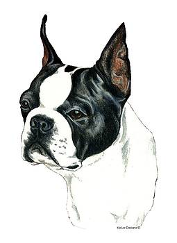Boston Terrier by Kathleen Sepulveda