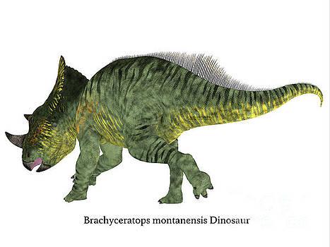 Corey Ford - Brachyceratops Dinosaur Tail