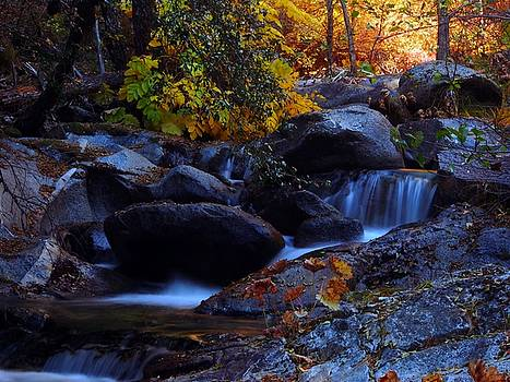 Brandy Creek by Michele James