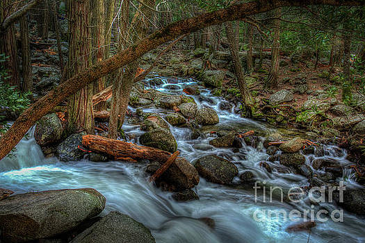 Bridalveil Creek in Shady Forest in Yosemite by Terry Garvin