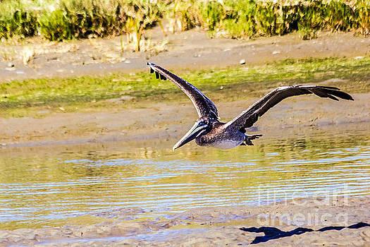 Kate Brown - Brown Pelican II